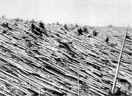 Árboles caídos en Tunguska