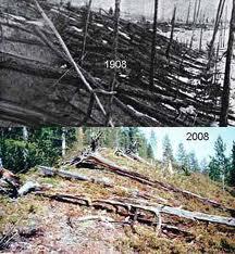 Antes y después en los bosques de Tunguska