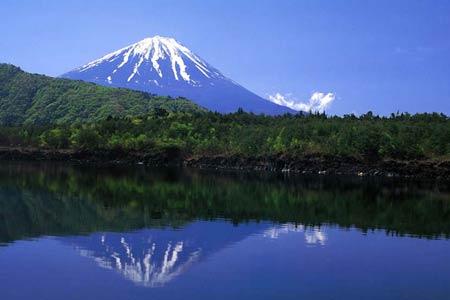 Bosque Aokigahara y monte Fuji