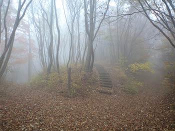 Imagen del bosque Aokigahara