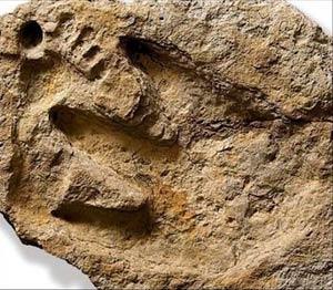 Huella humana junto a la de un dinosaurio en Glen Rose