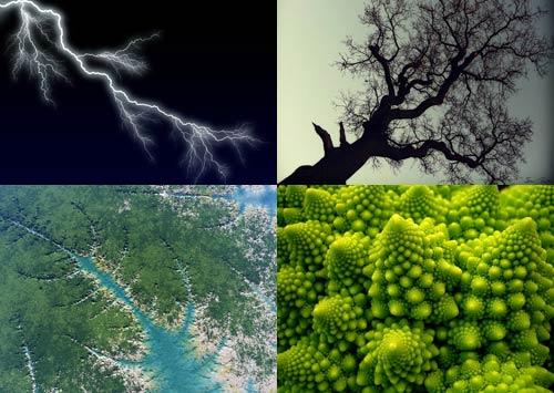 Elementos fractales de la naturaleza