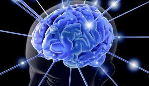 El tamaño del cerebro no importa